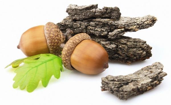 Кора дуба - лечебные свойства и противопоказания, применение 1