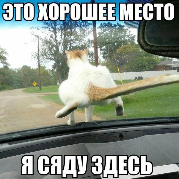 Кошки - смешные фото с надписями до слез, прикольные, ржачные 11