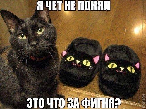 Кошки - смешные фото с надписями до слез, прикольные, ржачные 12