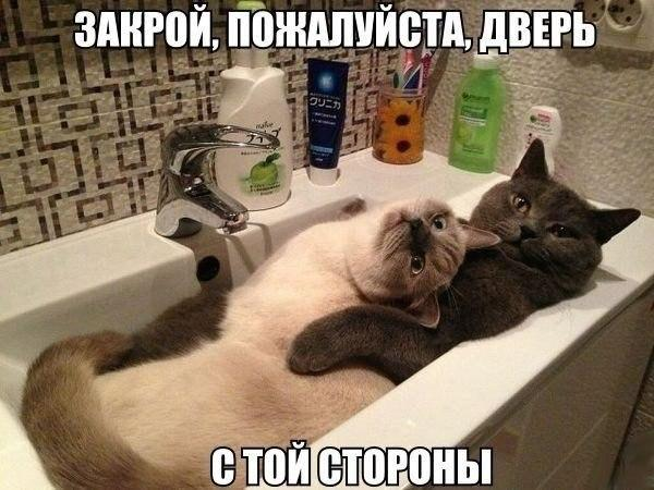 Кошки - смешные фото с надписями до слез, прикольные, ржачные 13
