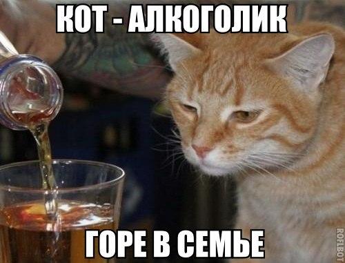 Кошки - смешные фото с надписями до слез, прикольные, ржачные 16