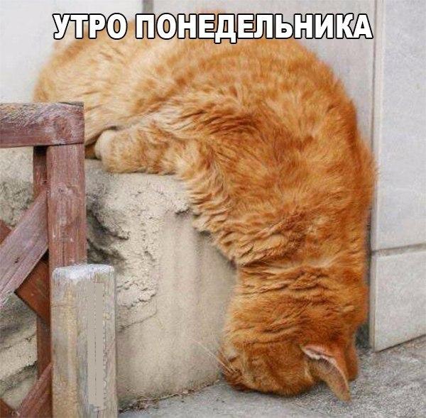 Кошки - смешные фото с надписями до слез, прикольные, ржачные 2