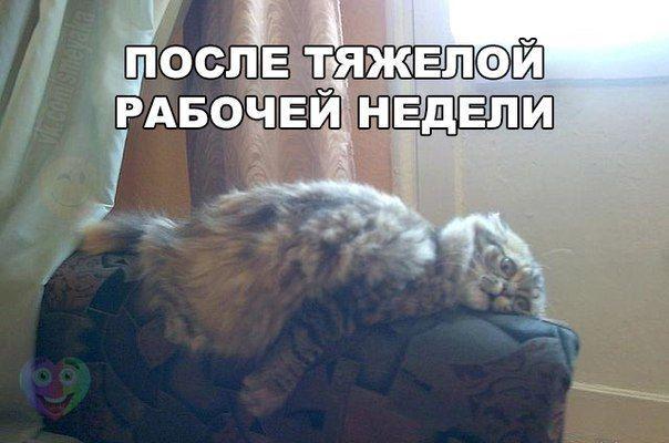 Кошки - смешные фото с надписями до слез, прикольные, ржачные 3