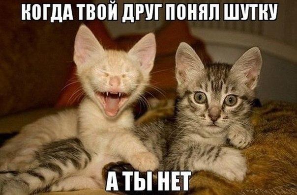 Коты приколы с надписями до слёз