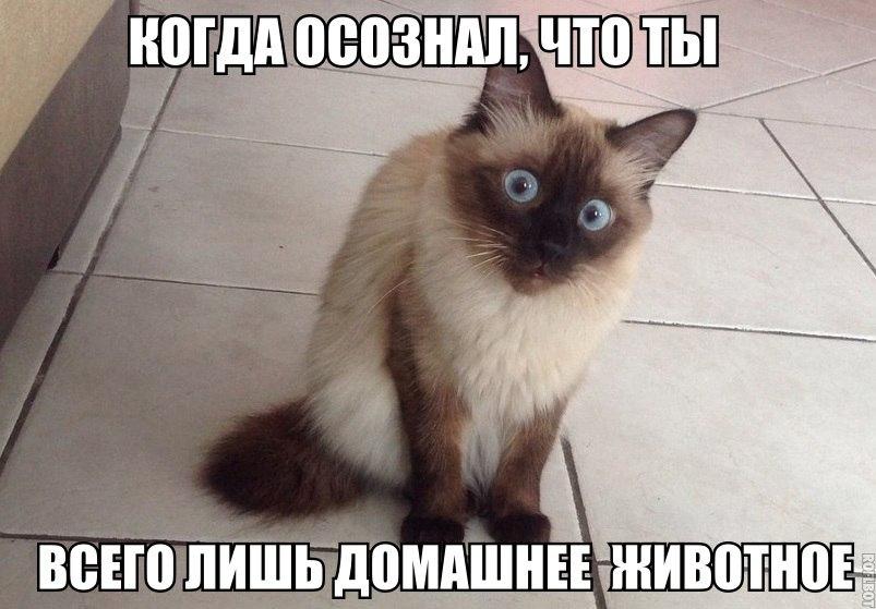 Кошки - смешные фото с надписями до слез, прикольные, ржачные 7