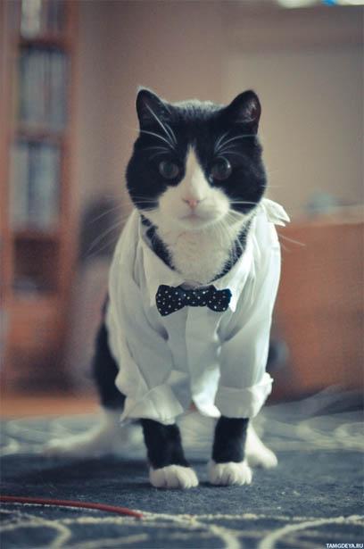Кошки фото красивые и смешные - смотреть бесплатно, картинки 1