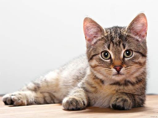 Кошки фото красивые и смешные - смотреть бесплатно, картинки 10