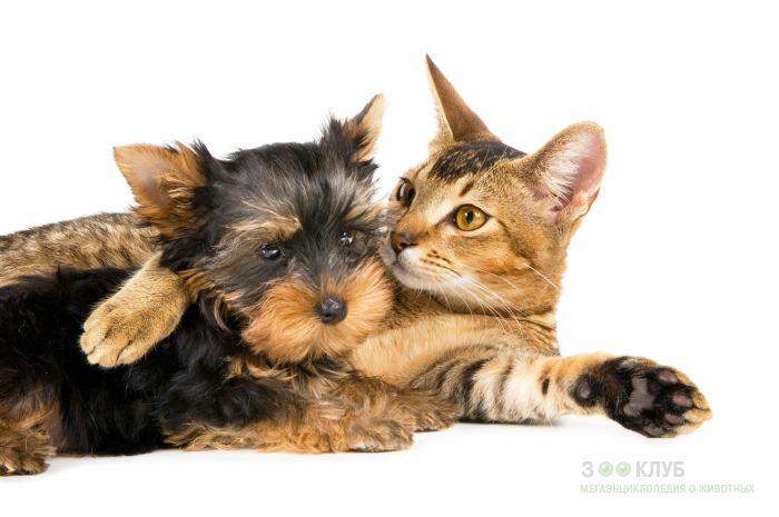 Кошки фото красивые и смешные - смотреть бесплатно, картинки 12