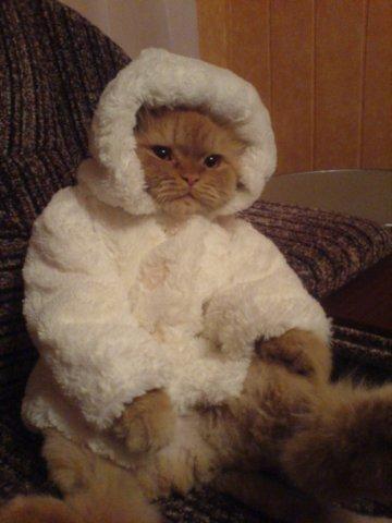 Кошки фото красивые и смешные - смотреть бесплатно, картинки 13