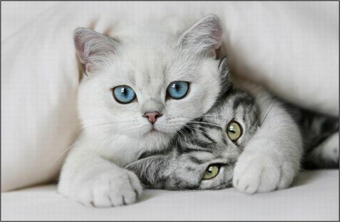 Кошки фото красивые и смешные - смотреть бесплатно, картинки 3