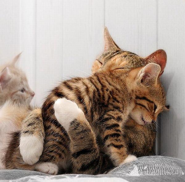 Кошки фото красивые и смешные - смотреть бесплатно, картинки 4
