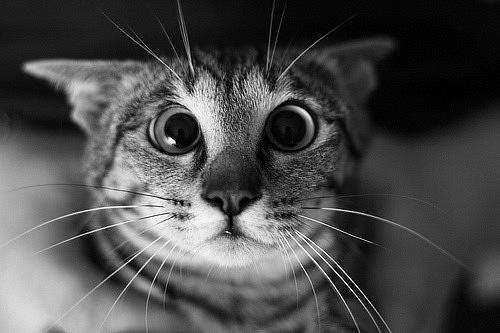 Кошки фото красивые и смешные - смотреть бесплатно, картинки 5