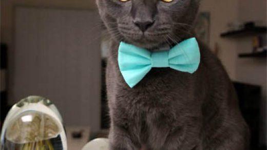Кошки фото красивые и смешные - смотреть бесплатно, картинки 6
