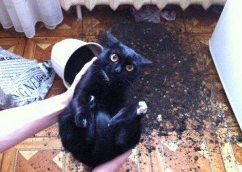 Кошки фото красивые и смешные - смотреть бесплатно, картинки 9