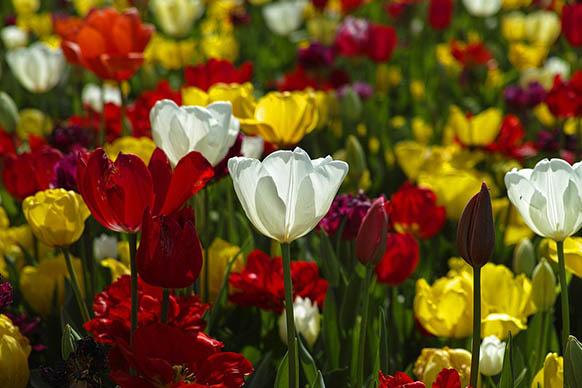 Красивые цветы фото и картинки - удивительные, прикольные 11
