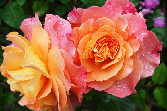 Красивые цветы фото и картинки - удивительные, прикольные 12