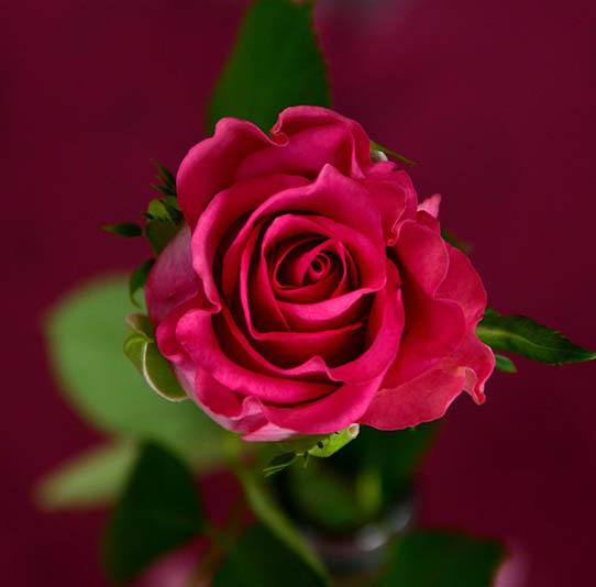 Красивые цветы фото и картинки - удивительные, прикольные 15