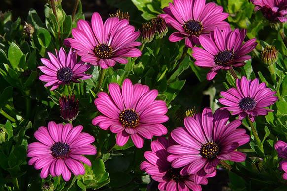 Красивые цветы фото и картинки - удивительные, прикольные 8