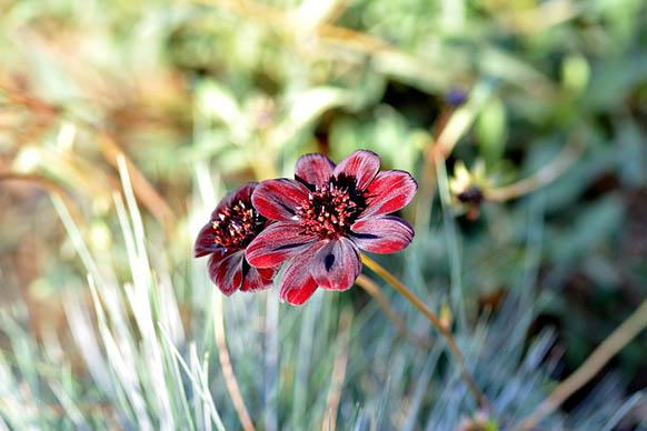 Красивые цветы фото и картинки - удивительные, прикольные 9