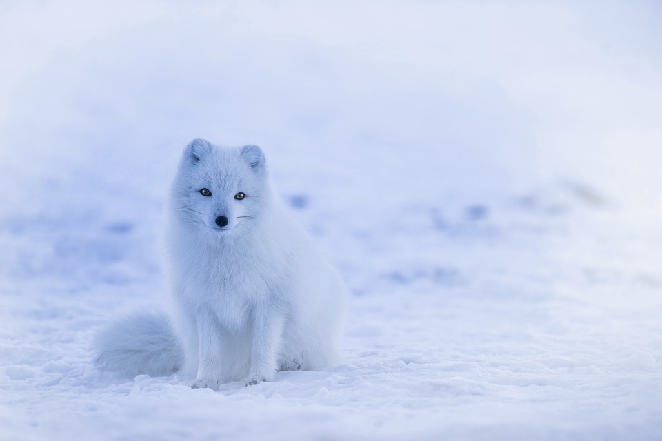 Природа зимы - картинки красивые, зимняя природа картинки 11
