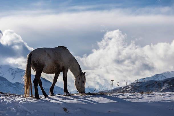 Природа зимы - картинки красивые, зимняя природа картинки 12