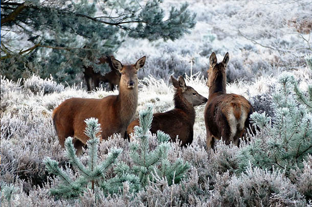 Природа зимы - картинки красивые, зимняя природа картинки 8