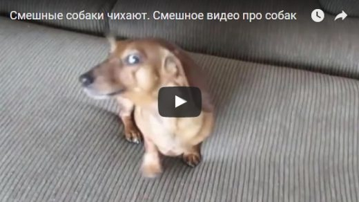Ржачные и смешные собаки - видео до слез скачать бесплатно