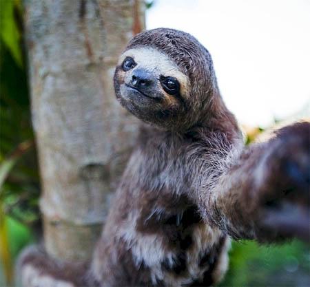 Ржачные и смешные фото про животных до слез - смотреть бесплатно 10