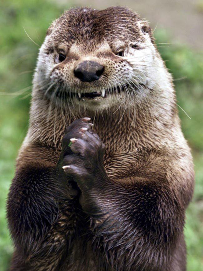 Ржачные и смешные фото про животных до слез - смотреть бесплатно 14