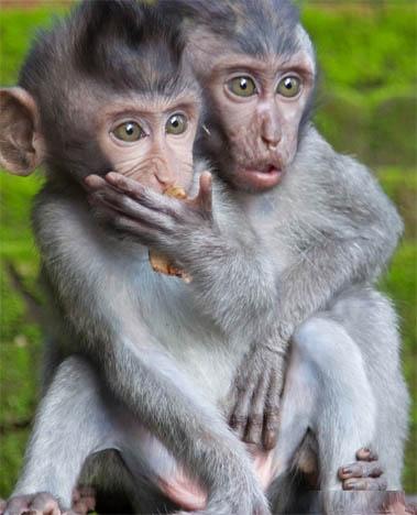 Ржачные и смешные фото про животных до слез - смотреть бесплатно 15