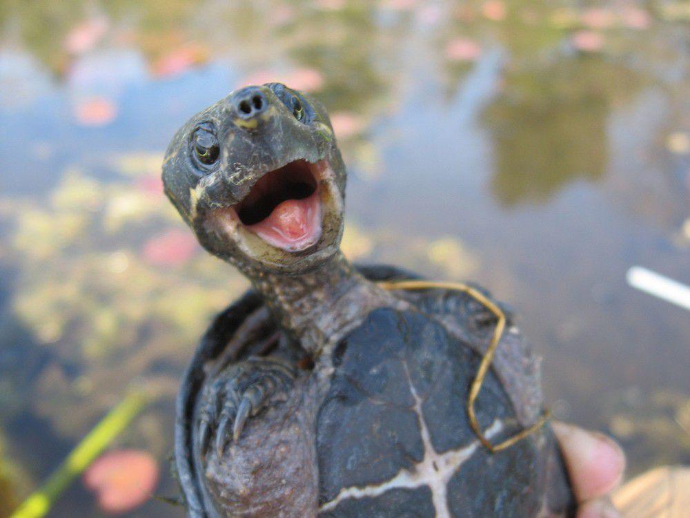Ржачные и смешные фото про животных до слез - смотреть бесплатно 6