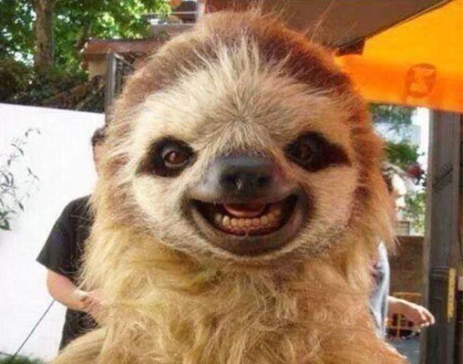 Ржачные и смешные фото про животных до слез - смотреть бесплатно 7