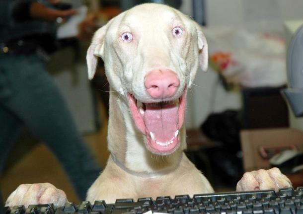 Ржачные и смешные фото про животных до слез - смотреть бесплатно 9