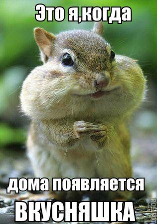 Ржачные и смешные фото про животных - смотреть бесплатно 1