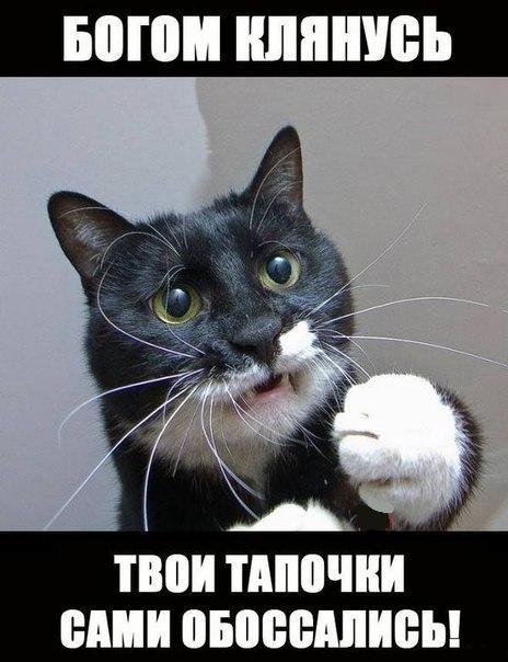 Ржачные и смешные фото про животных - смотреть бесплатно 12
