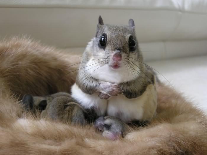 Самые милые животные в мире - фото, картинки, красивые, смешные 10