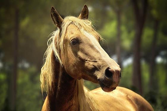 Самые милые животные в мире - фото, картинки, красивые, смешные 12