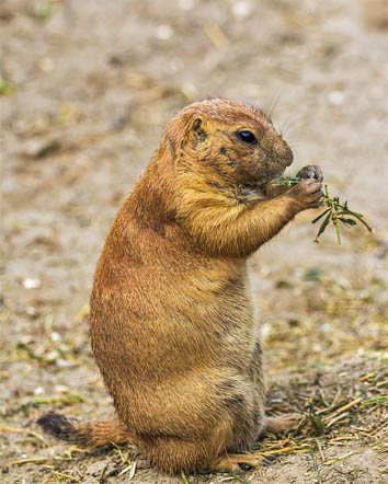 Самые милые животные в мире - фото, картинки, красивые, смешные 13
