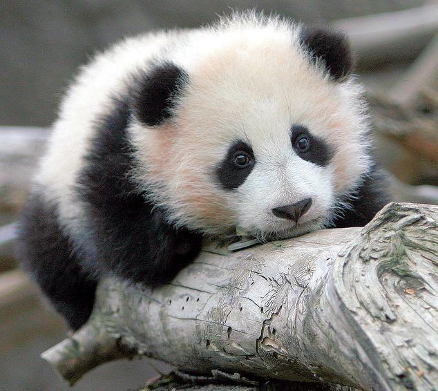 Самые милые животные в мире - фото, картинки, красивые, смешные 9