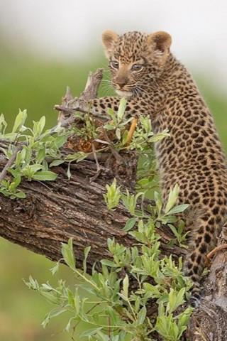 Скачать красивые картинки и фото на телефон - природа, пейзажи 5
