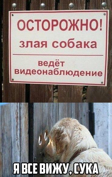 Смешные и ржачные картинки с надписями - смотреть бесплатно 11