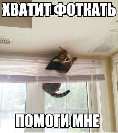 Смешные картинки с надписями про котов - прикольные, ржачные 10