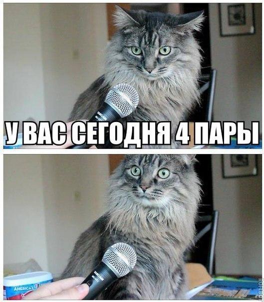 Смешные картинки с надписями про котов - прикольные, ржачные 11