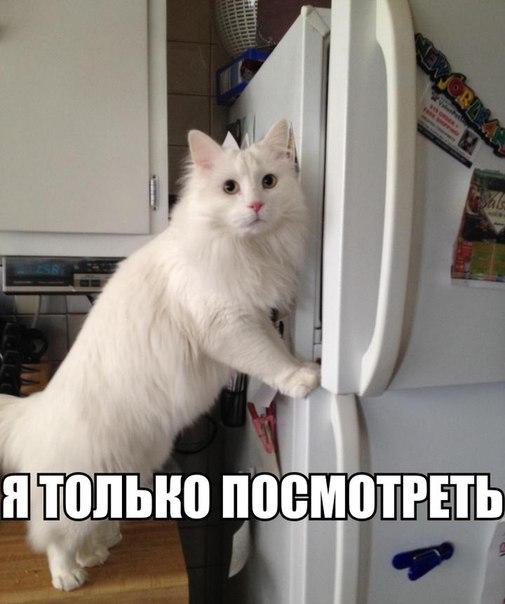 Смешные картинки с надписями про котов - прикольные, ржачные 17