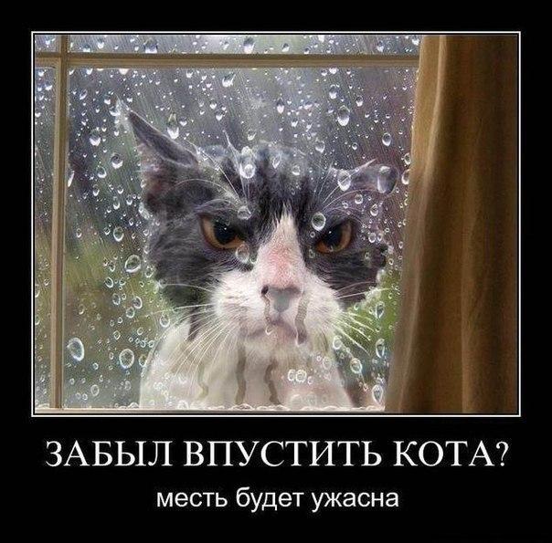Смешные картинки с надписями про котов - прикольные, ржачные 2