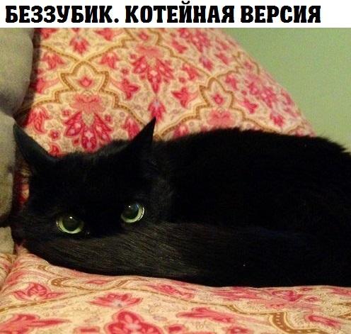Смешные картинки с надписями про котов - прикольные, ржачные 4