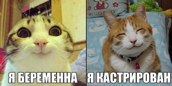 Смешные картинки с надписями про котов - прикольные, ржачные 7