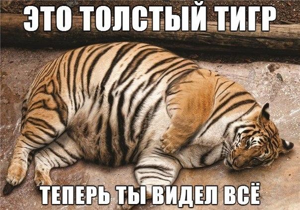 Смешные картинки с надписями про котов - прикольные, ржачные 8