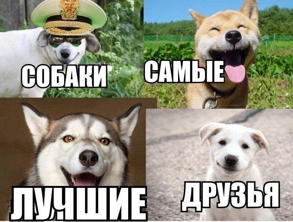 Смешные фото животных с надписями до слез - смотреть ржачные картинки 1