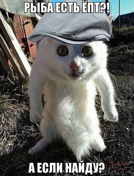 Смешные фото животных с надписями до слез - смотреть ржачные картинки 13